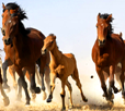 horses galloping tiny